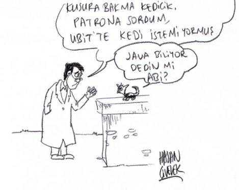 kedi_eski